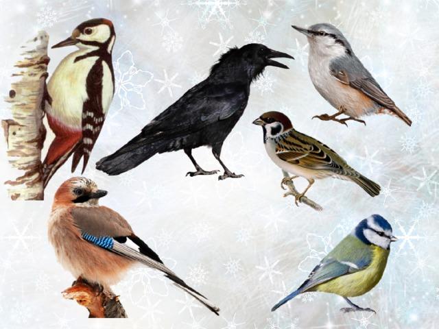 Картинки птиц которые улетают на зиму