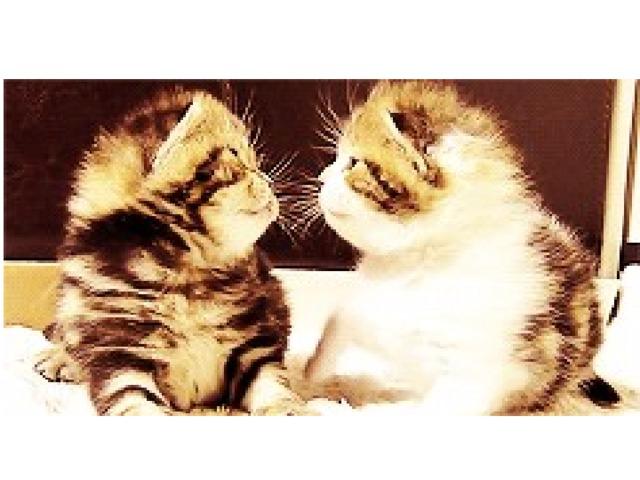 гифы котики целуются палец яичный желток