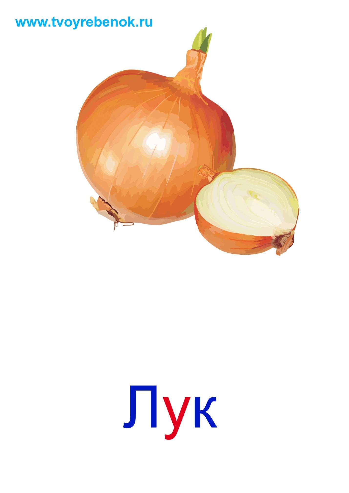 Овощи в картинках для детей по одному