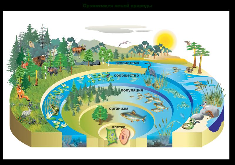 картинки экосистем для доу крест четки очень