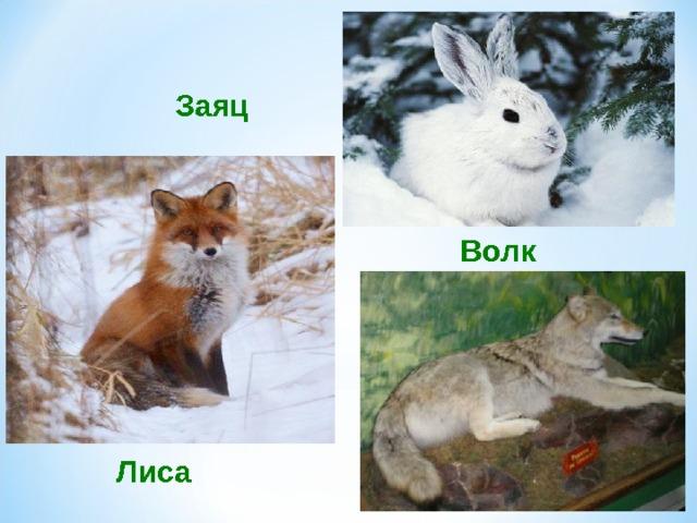Картинки зайца медведя волка и лисы