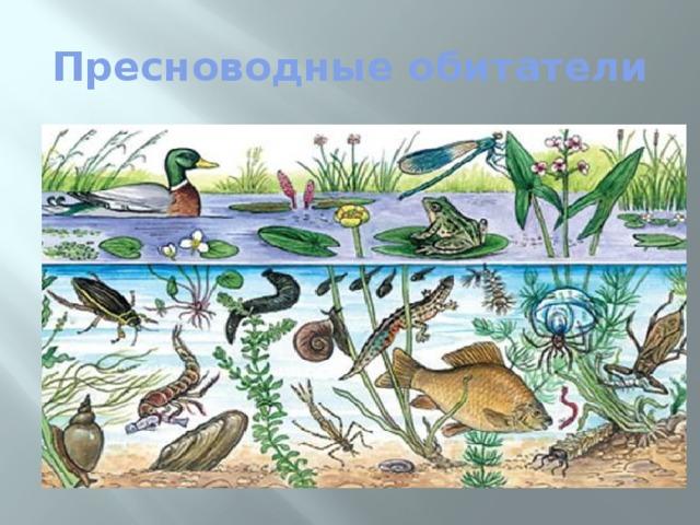 Картинки пресный водоем и его обитатели
