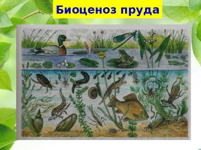 Реферат на тему биоценоз водоема 1023