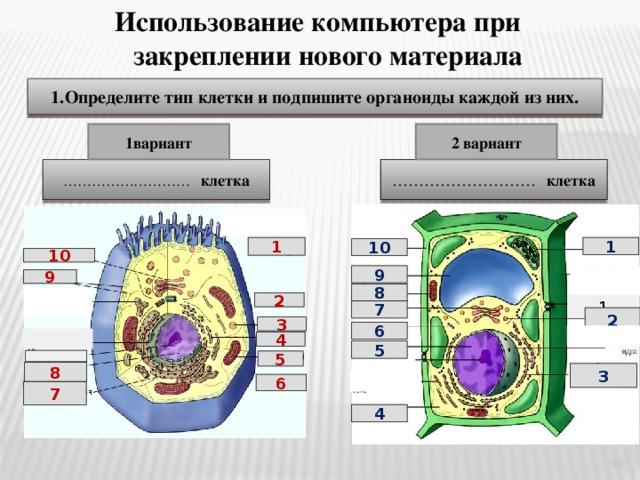 Картинки клетка и ее органоиды