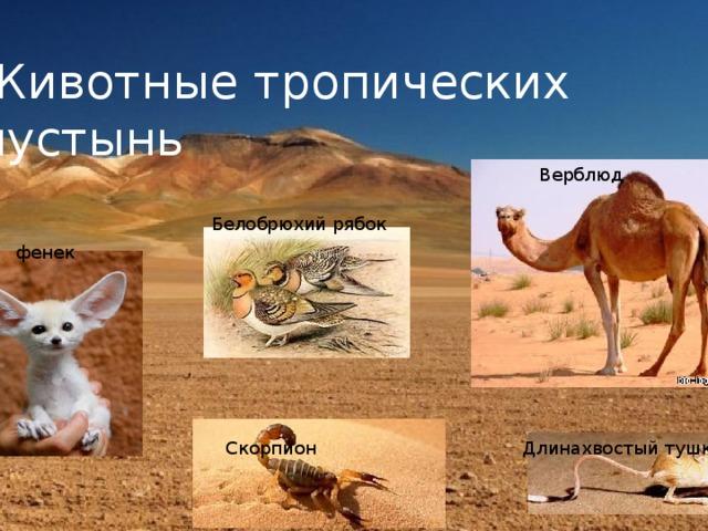 Животные и растения тропических пустынь и картинки