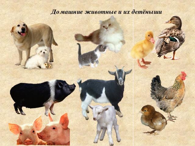 Картинки домашние животные и их детеныши, запрет мобильного