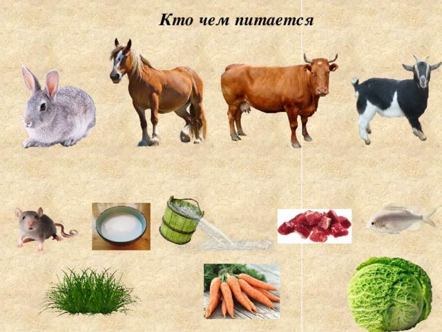 Чем питаются домашние животные в картинках для детей, надписями люблю скучаю