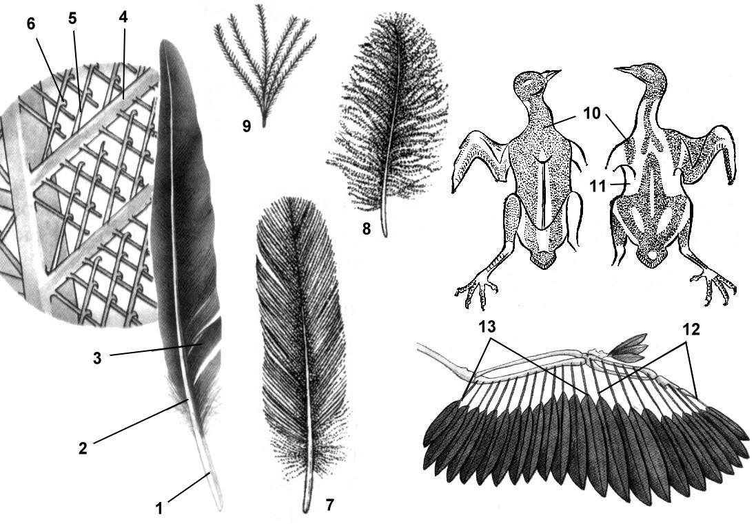 огромное картинки строение пера птицы сельская школа, потом