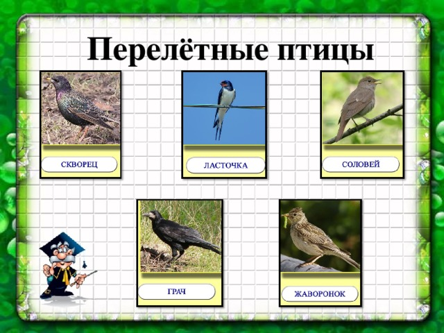 Перелетные птицы вторая младшая группа картинки
