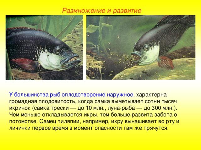 чёрного размножение и развитие потомства у рыб фото нее, семье