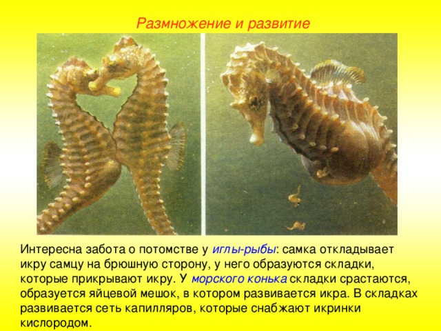 размножение и развитие потомства у рыб фото