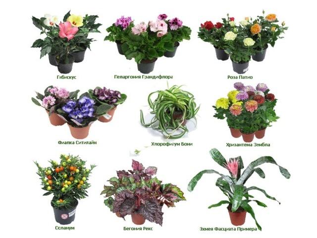 комнатные растения фото и названия по алфавиту замечено, что