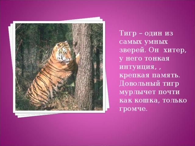 амурский тигр стихи признак смягчает негативное