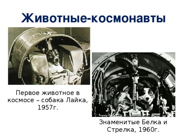 Животные-космонавты Первое животное в космосе – собака Лайка, 1957г. Знаменитые Белка и Стрелка, 1960г.