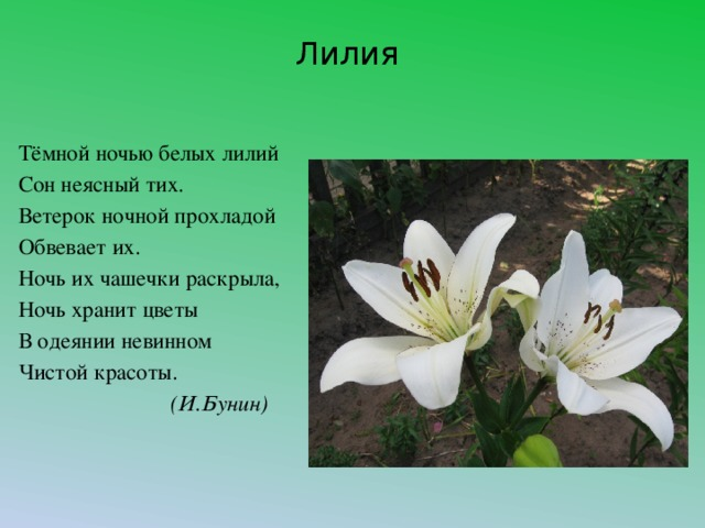 Лилия стихи картинки, поздравление днем рождения