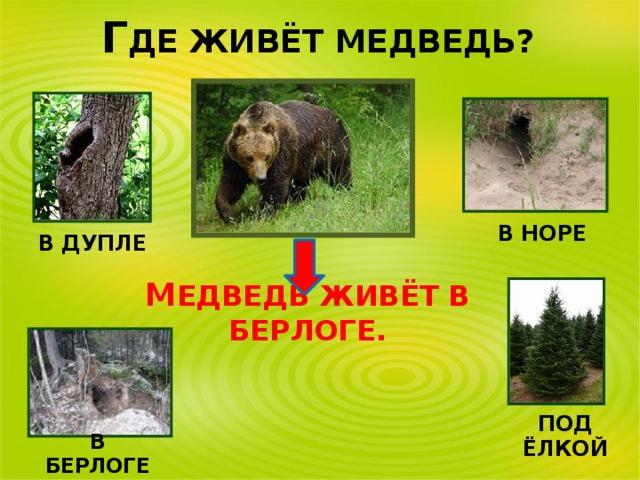 картинка где живет медведь сорт красного столового