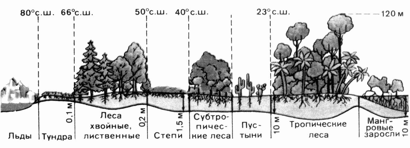 Какой процент земли занимает суша