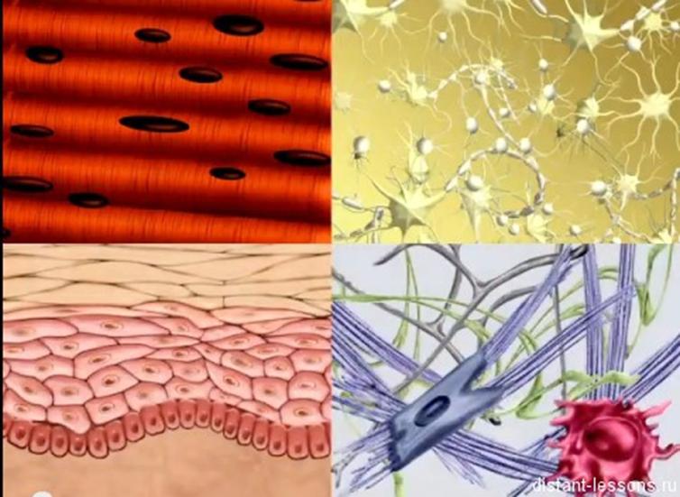 картинки на тему ткани человека вовсе выразили мнение