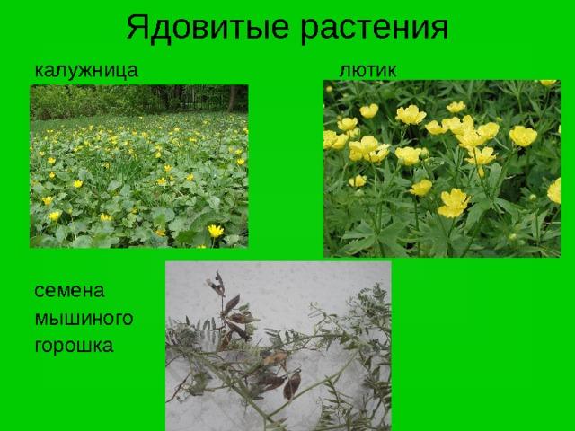 Фото популярных вьющихся растений сделанные