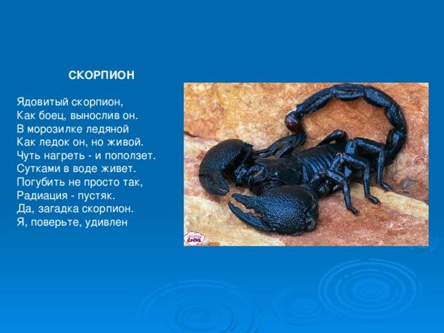 Описание скорпиона в картинке