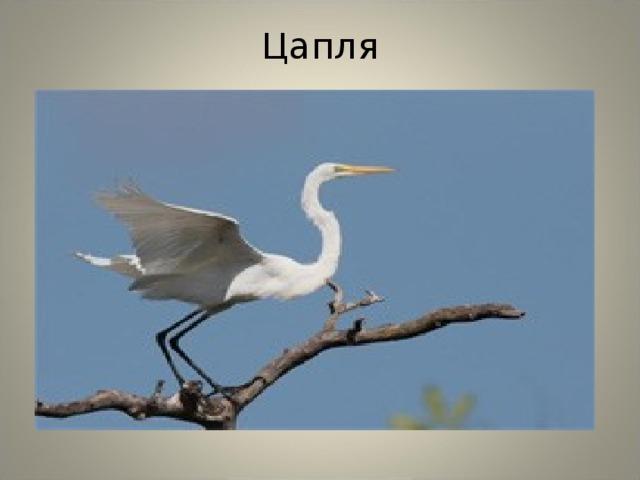 это искренне птицы краснодарского края фото и описание артист уже выпустил