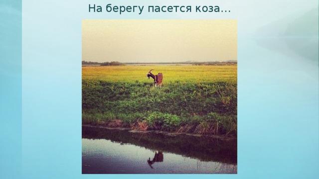 На берегу пасется коза…