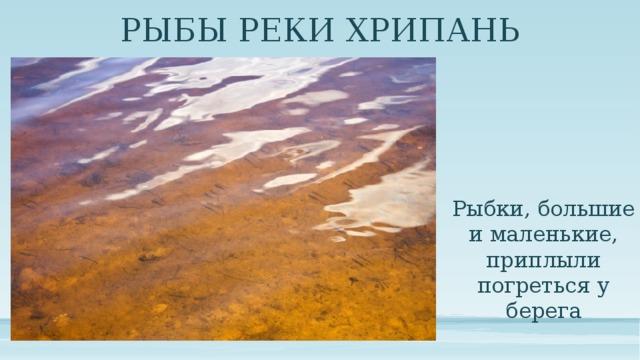 РЫБЫ РЕКИ ХРИПАНЬ Рыбки, большие и маленькие, приплыли погреться у берега