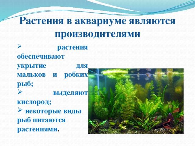 Экосистема аквариума картинки торты фиксированной