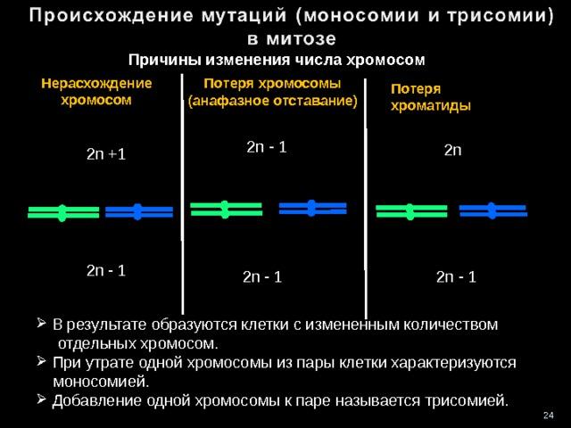 Причины изменения числа хромосом Нерасхождение хромосом Потеря хромосомы (анафазное отставание) Потеря хроматиды 2n - 1 2n 2n +1 2n - 1 2n - 1 2n - 1  В результате образуются клетки с измененным количеством  отдельных хромосом.  При утрате одной хромосомы из пары клетки характеризуются  моносомией.  Добавление одной хромосомы к паре называется трисомией. 24