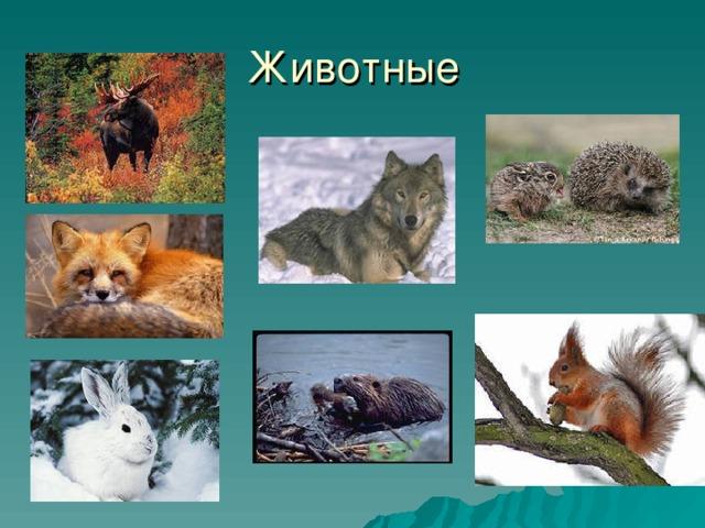 животные и растения татарстана картинки портфель натуральной телячьей