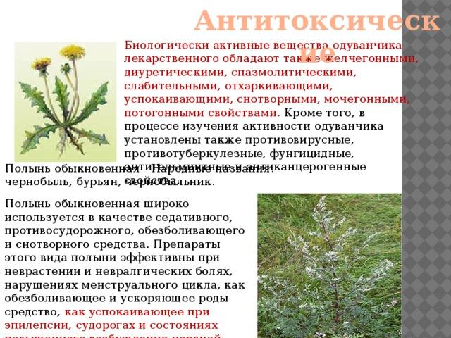 Слабительные лекарственные растения реферат 4426