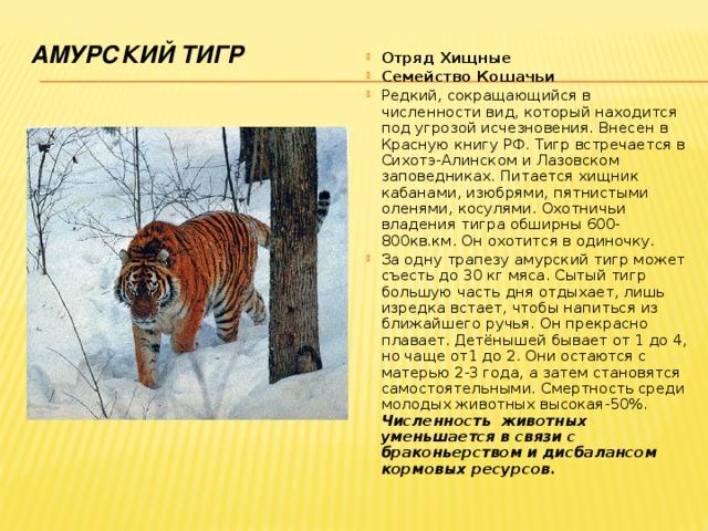 Амурский тигр в красной книге россии