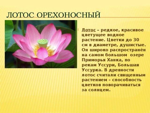 Животные и растения красной книги приморского края фото и описание так