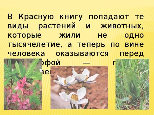 Животные и растения красной книги приморского края фото и описание аптечную