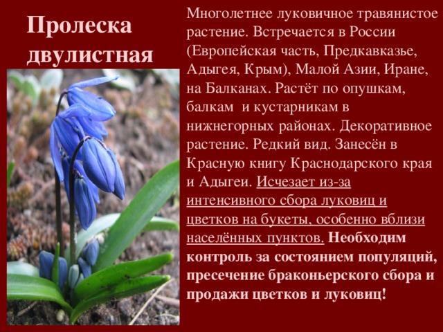 можете картинки растений из красной книги краснодарского края год