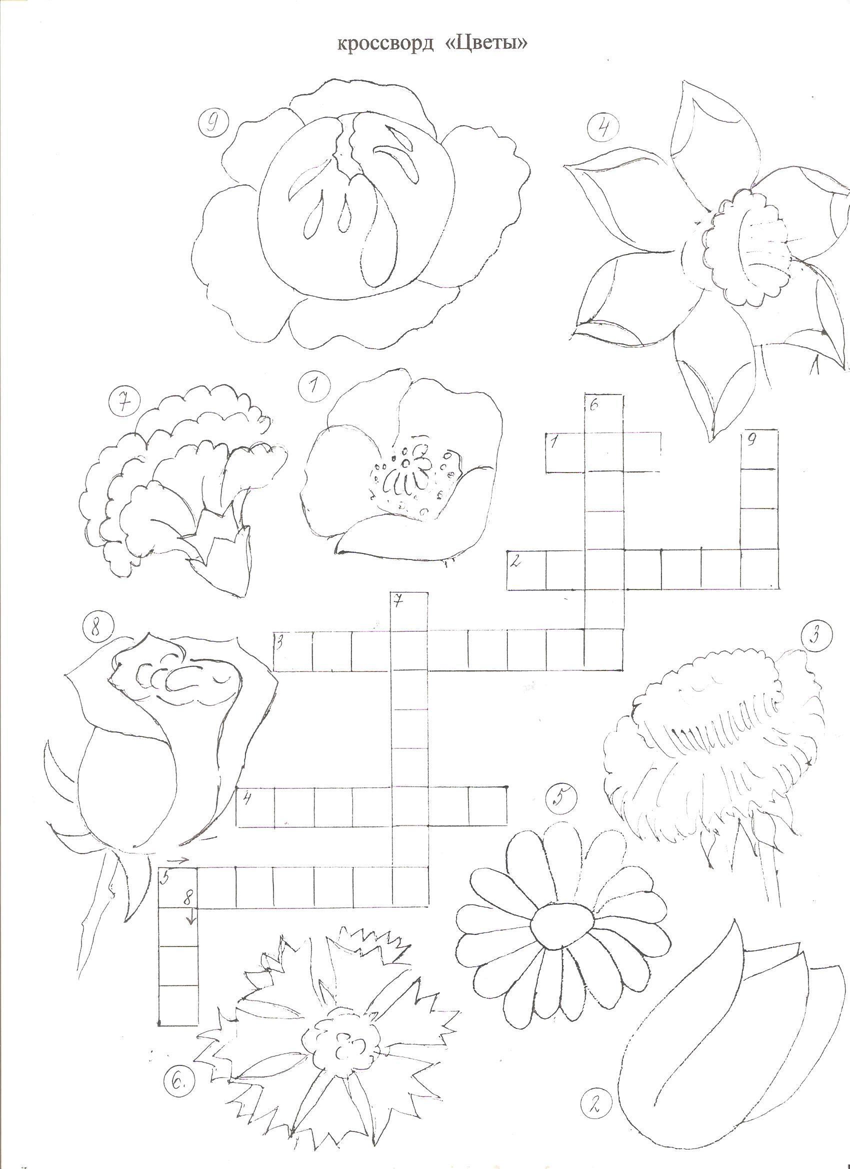 Кроссворды о растениях в картинках разукрашки
