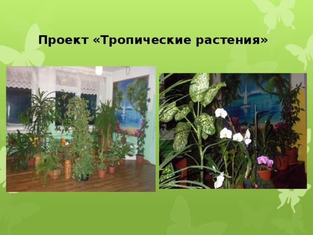 Проект «Тропические растения»