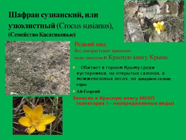 Растения красной книги крыма фото и описание