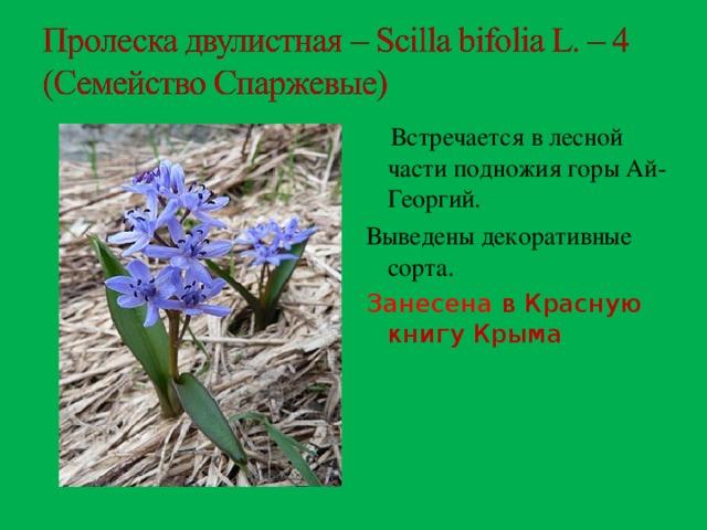 чаще растения красной книги крыма фото и описание виде