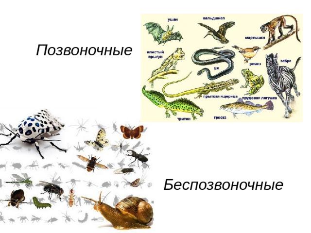 Многообразие животного мира доклад 9553