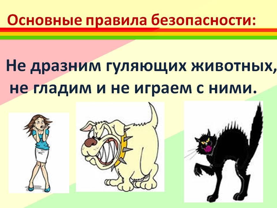 картинки правила поведения с бездомными животными дороги его