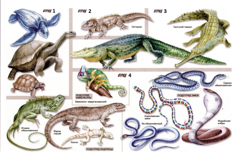 хорошим рептилии названия с картинками выбор наличников