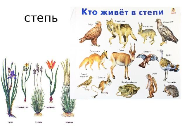 Степь весной растения и животные в картинках