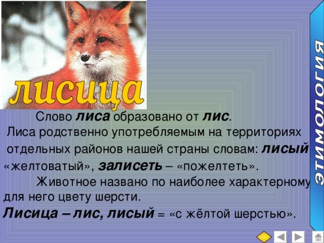 Прикольной лошади, картинки лиса с текстом