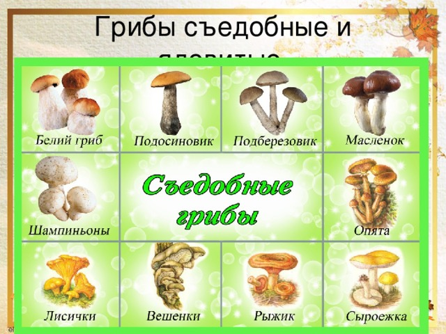Юбилеем, картинки съедобные и несъедобные грибы с названиями
