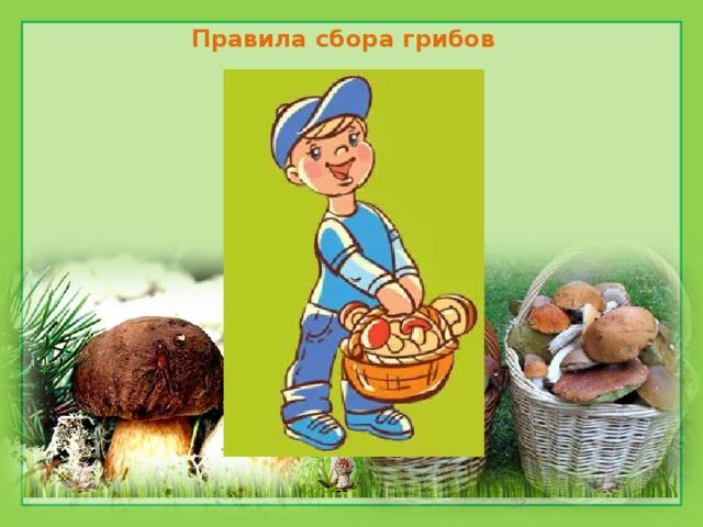 Правила сбора грибов в картинках, скрапбукинга