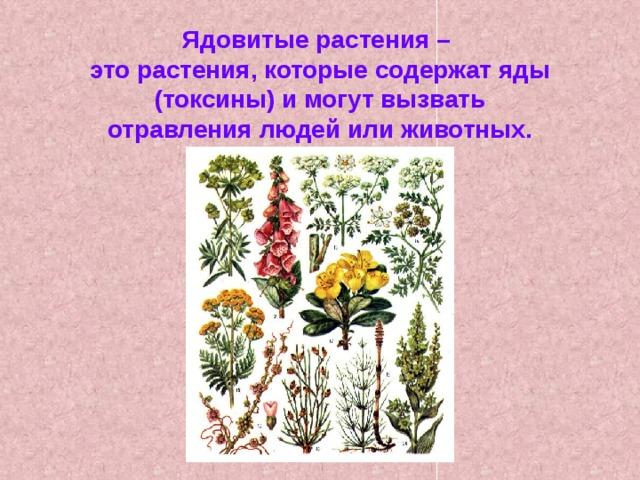 Картинки о растениях 3 класс