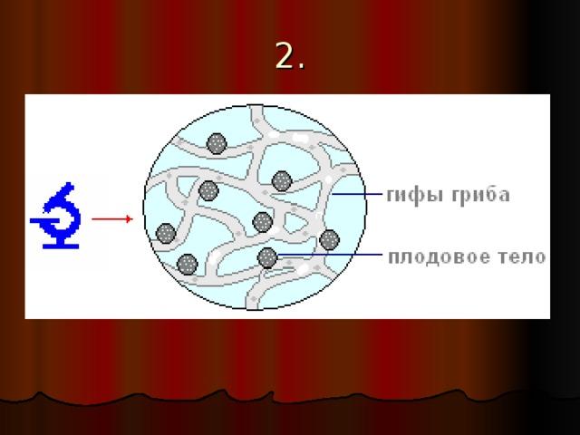 Открытка ураза, гифы биология что